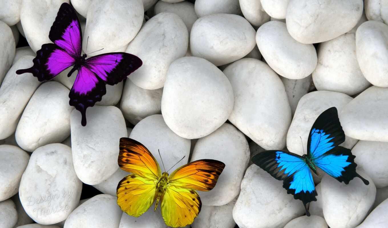 очарование, макро, бабочки,