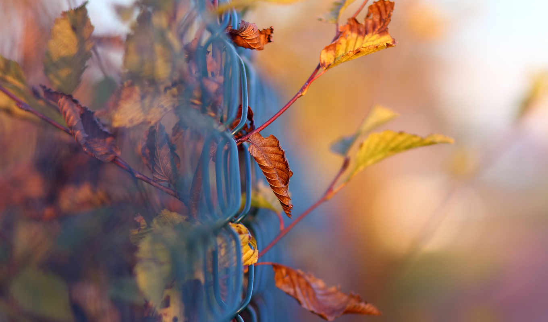 осень, макро, листва, tapety,