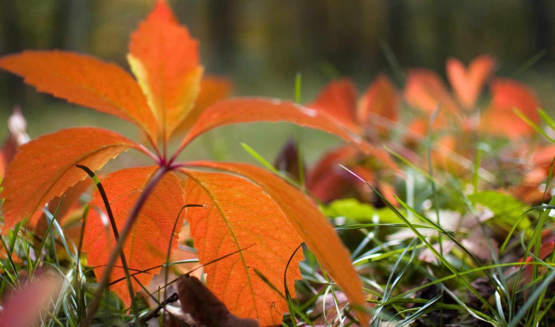 осень, природа, листья, животные,