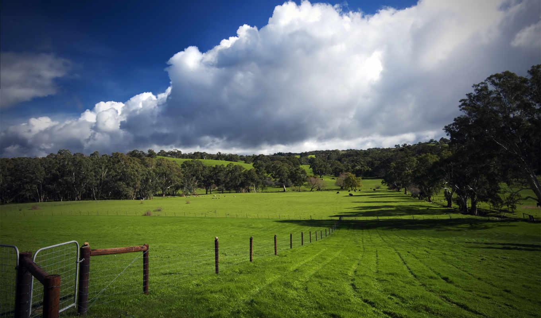трава, поле, ago, почти, лет,