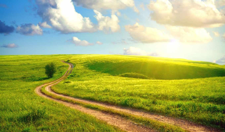 дорога, деревя, priroda, окном, лето