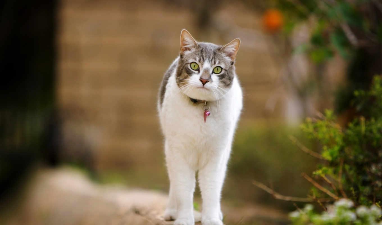 кот, коты, кошки, zhivotnye, рисованные,