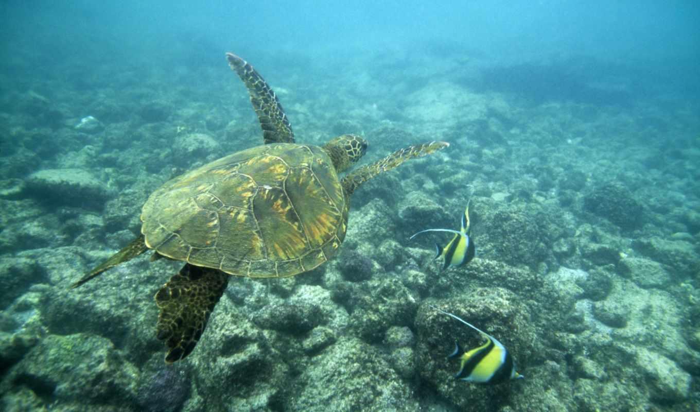 underwater, desktop, море, код, world, free, черепаха,