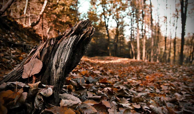 дек, просмотреть, пень, деревья, tree, лес, about, aston, martin, more, information, мертвое, which, belongs,