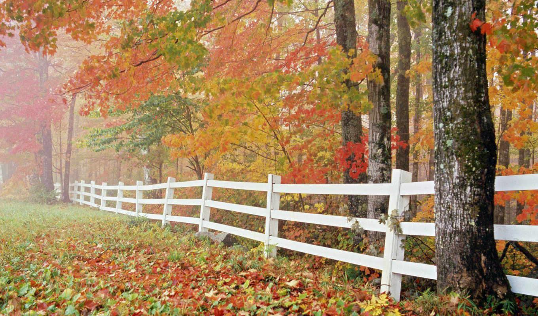 природа, категория, сентябрь, июня, автор, admin, mix, осень,
