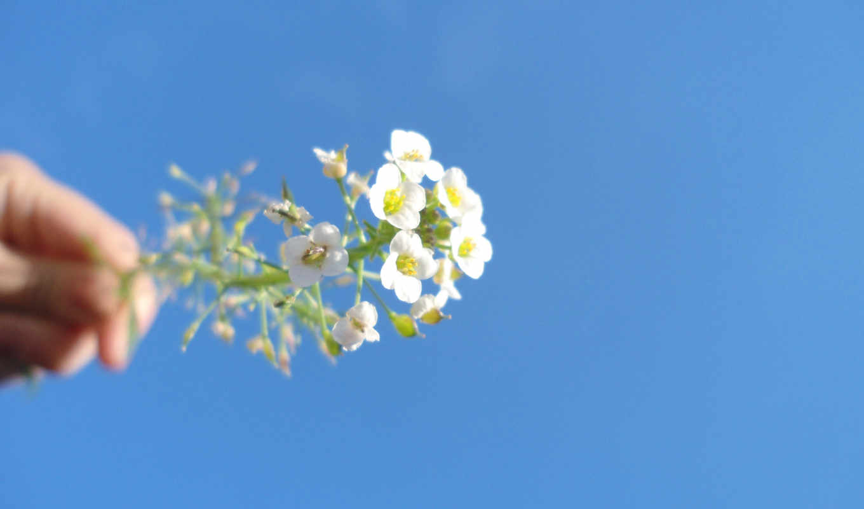 krasivo, blue, небо, макро, mac, ноутбук, цветы, марта, разделе,