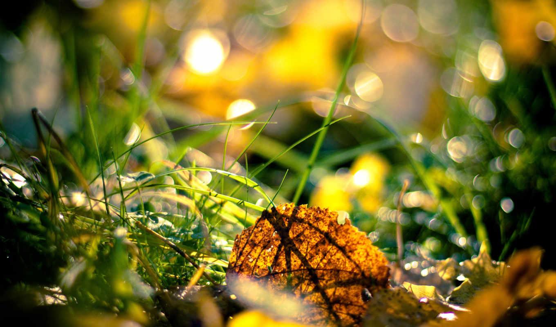 листья, осень, трава, осенние, лист,