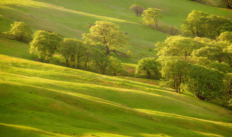 природа, склон,, вечернее, деревья, hill,