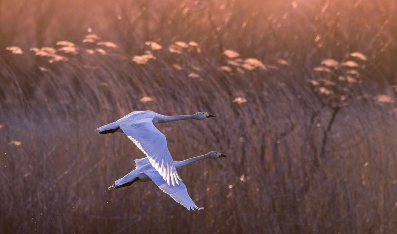 птицы, desktop, цветы, blue, птица,