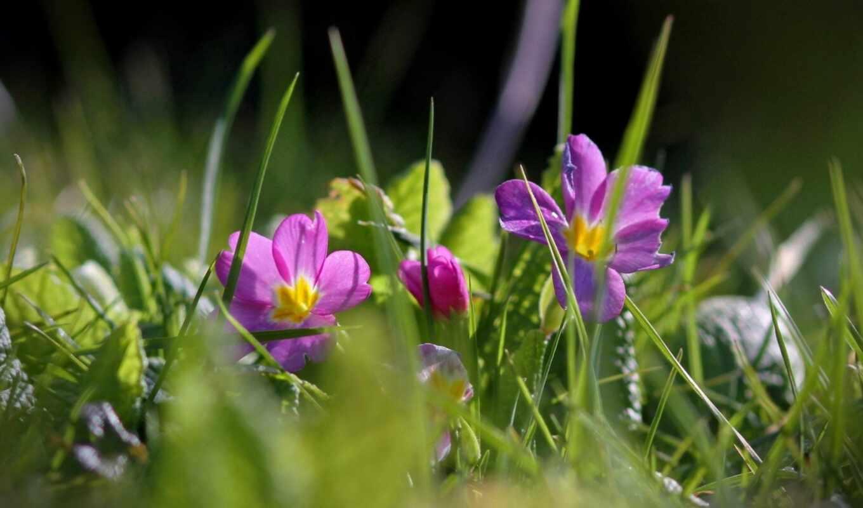 природа, трава, цветы, makryi, free, land, цветочек, камень, fonwall, собрать, качественные