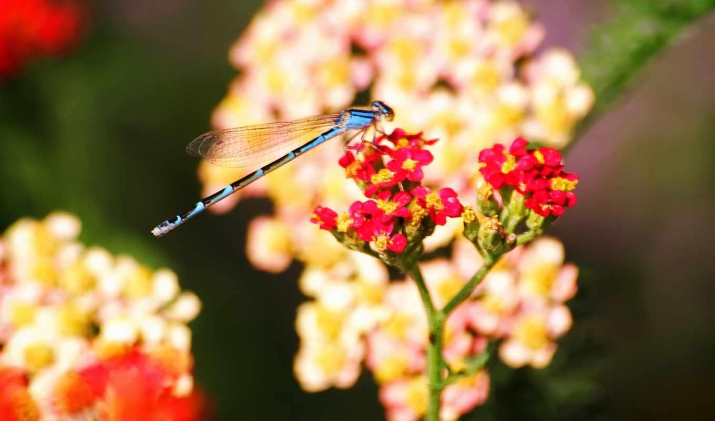 цветы, wallpapers, насекомые, стрекоза, chuồn, nice, những, ngắm, điểm, смотрите, hè, photos, rỡ, cánh, rực, tô,