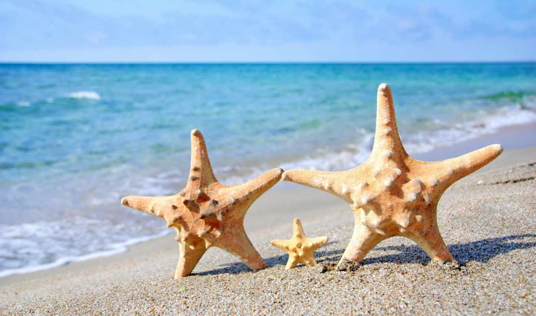 пляж, starfish, море, песок, summer,