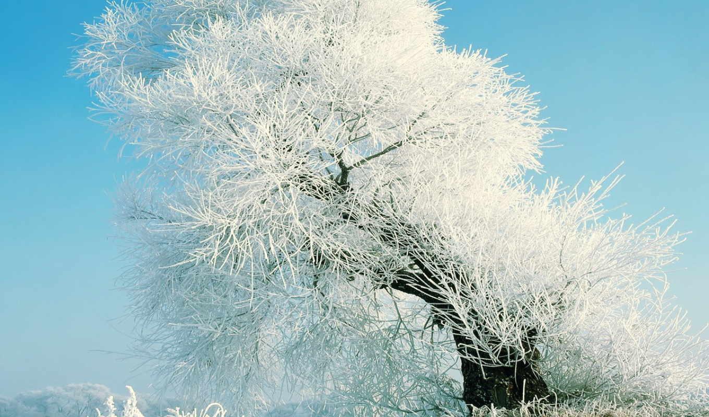 winter, русская, дек,