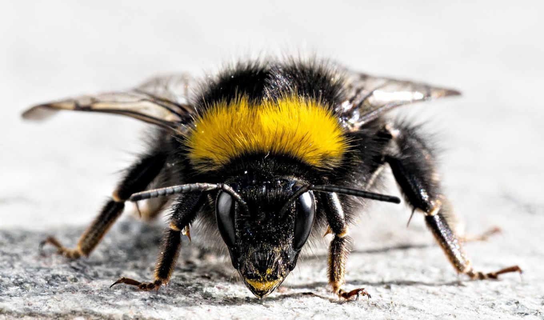 пчела, усики, devushka, makro,