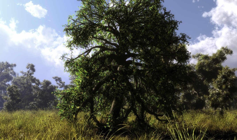 природа, дерево, трава, обновление, ежедневное, высоком,