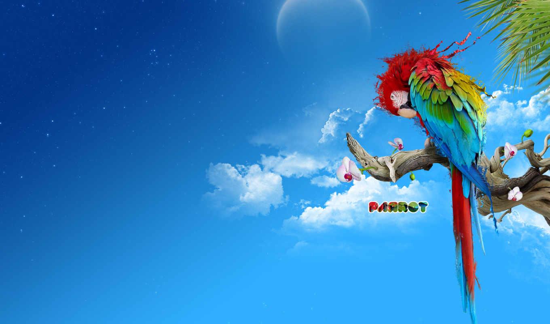 попугай, multicolored, перья, branch, дек,