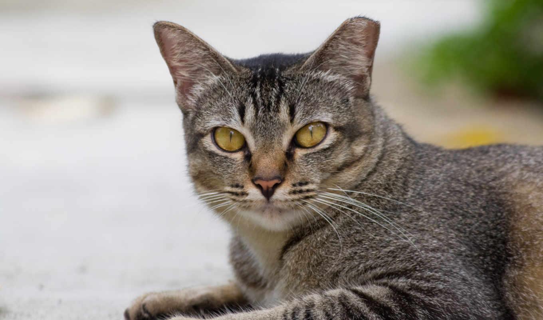 обои, котэ, cat, фото, улица, кот, котенка, купить