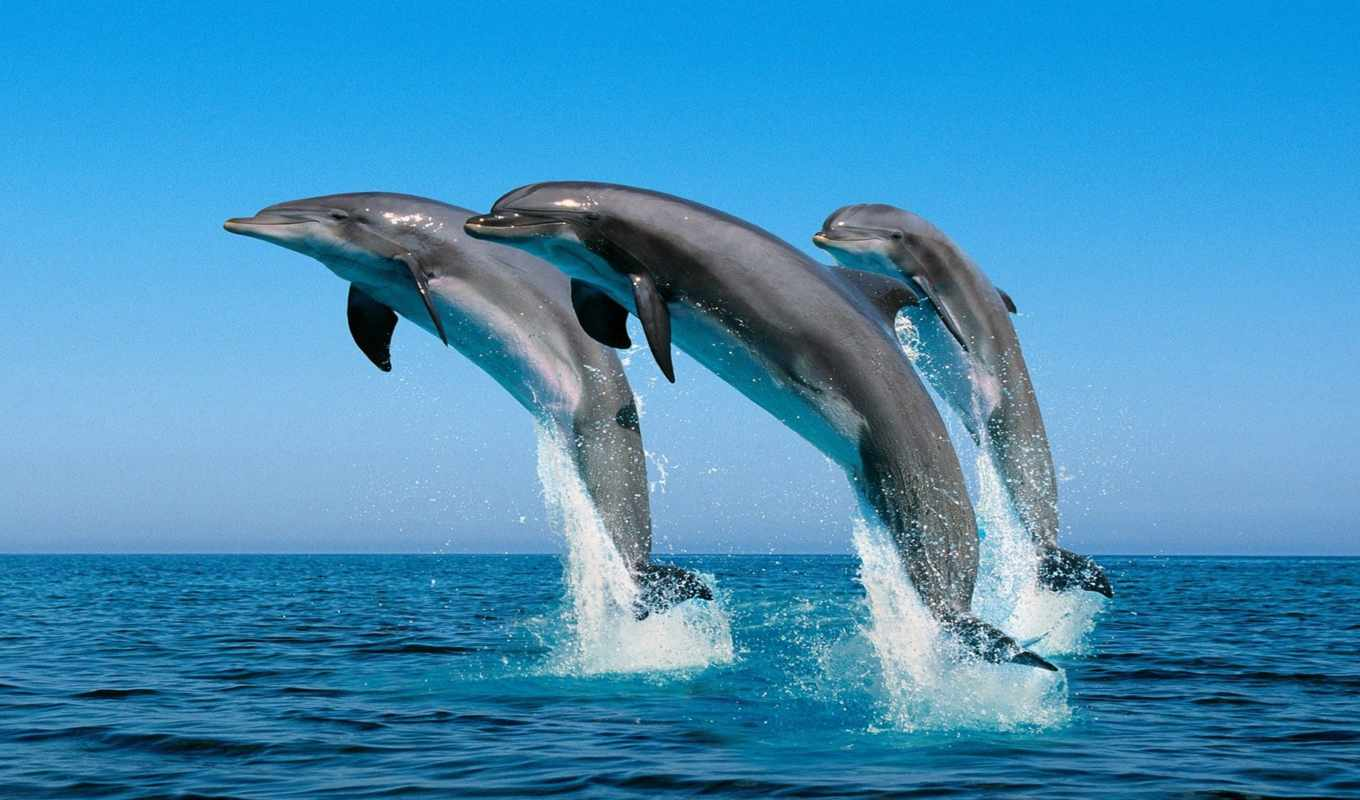 dolphins, jumping, water, out,