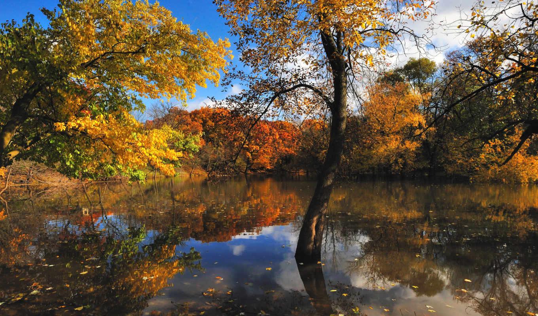 осень, природа, деревя, озеро, лес,