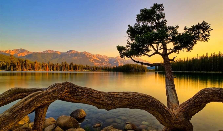 shirokoformatnyi, природа, fact, дерево