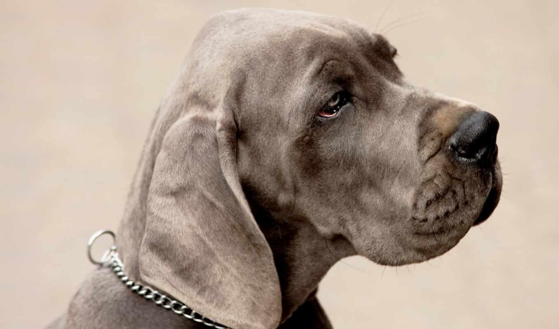 sad, dog, wallpaper, hd, free, is, space, wallpape