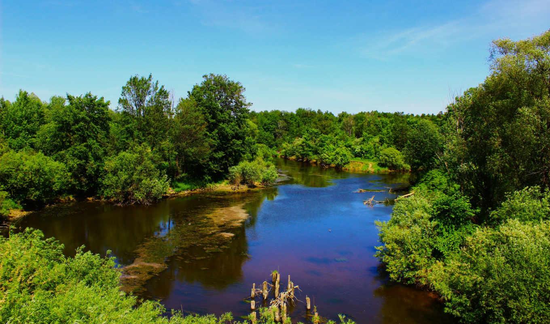 ,река, лес, заводь, лето,
