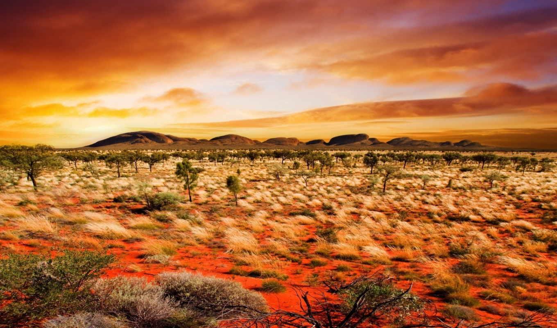 природа, растения, пустыня, оранжевый,