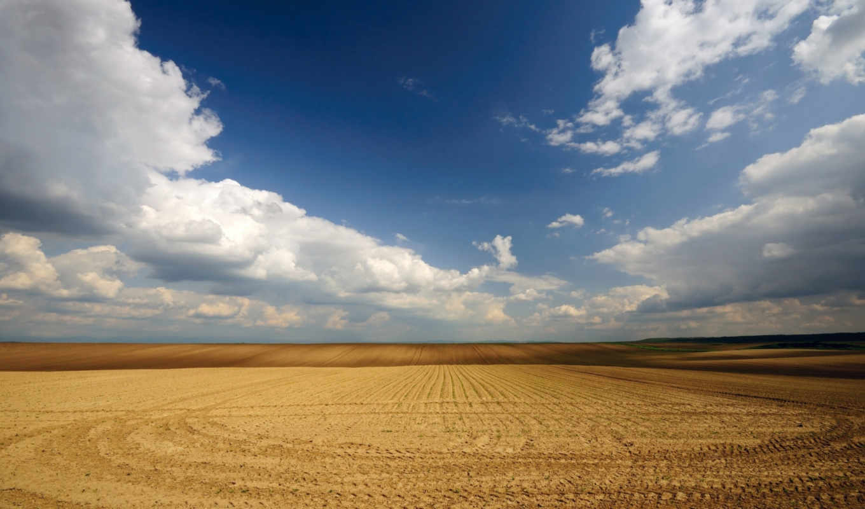 поле, пшеничное, browse, трава, скошенное, река, качества, высокого,