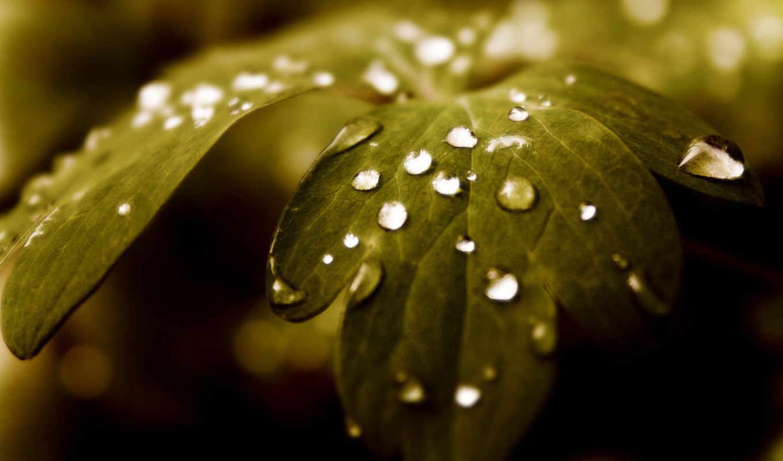 цветами, resimleri, зеленые, doğa, капли, листья, темно, leaf, image, green, листке, её, картинку, çiçek, чтобы, реальном, размере, просмотреть,