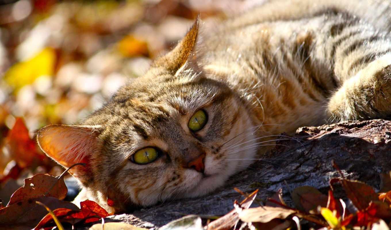 пейзажи -, красивые, фэнтези, животные, количество, mixed, природы, incredible, природа, animal,