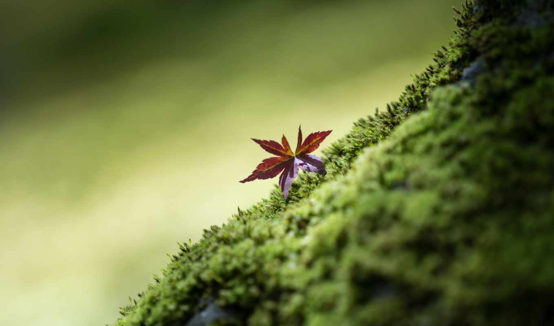 природа, макро, изображение, зелёный,