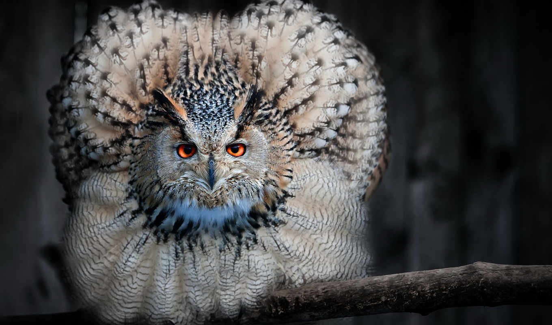 фото, profile, животные, сова,