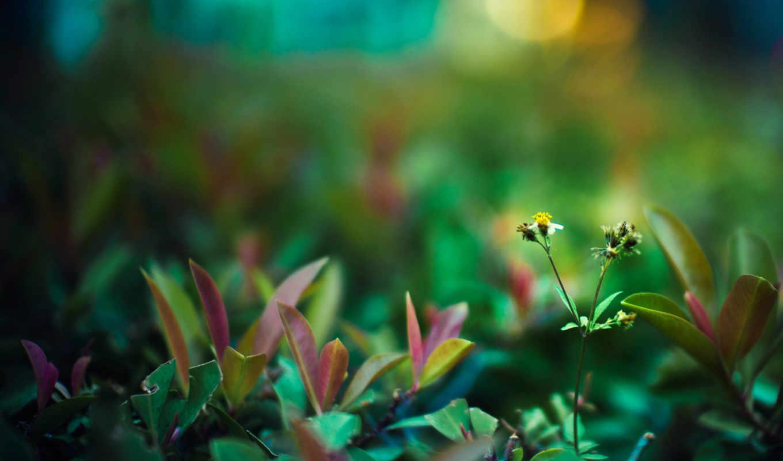 galaxy, art, samsung, широкоформатные, flower, ассорти, plants,