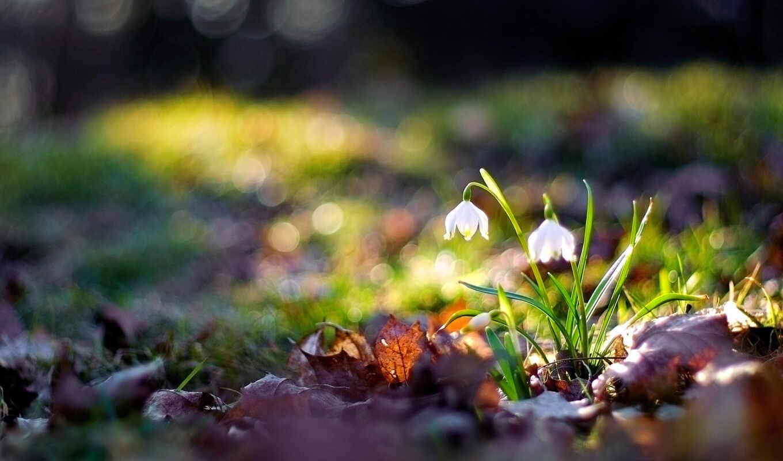 природа, цветы, макро, flowers,