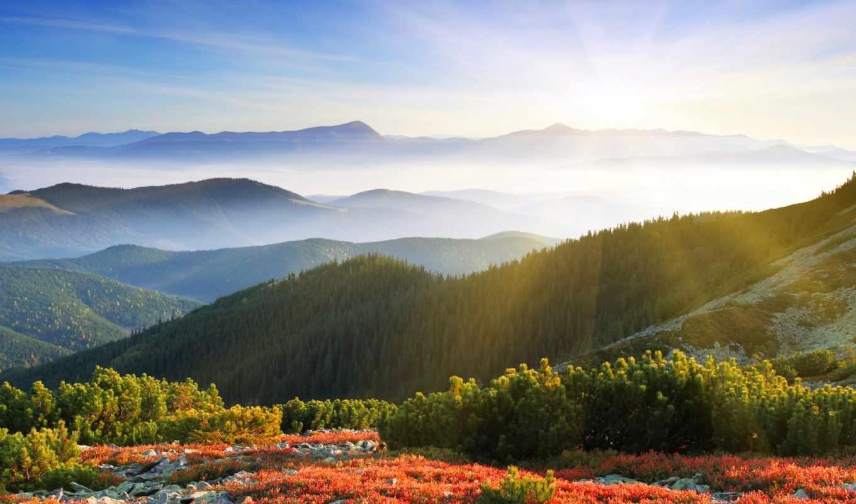 лес, туман, рассвет, утро, красивые, sun, pack, лучи, web,
