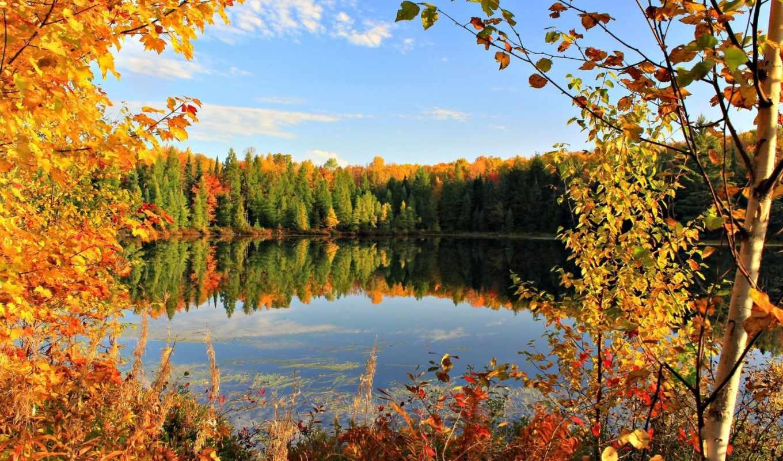 осень, золотая, листья, пейзажи -, деревья, небо,