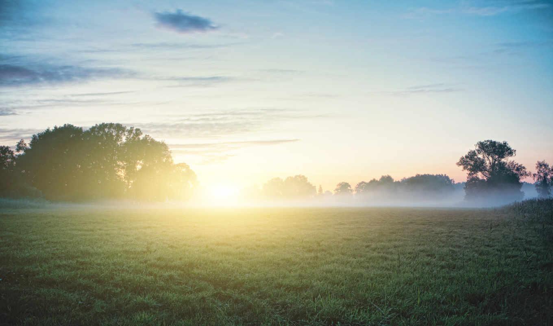 утро, роса, туман, трава, природа, лес, sun,