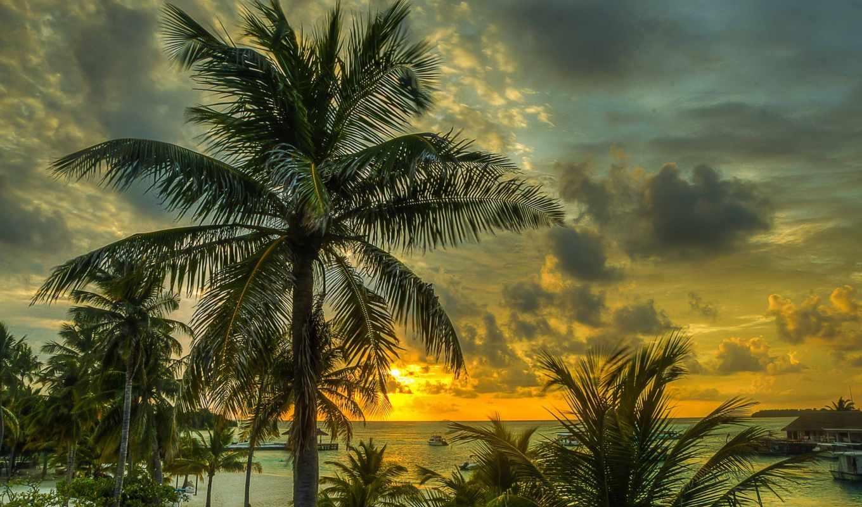 пальмы, закат, maldives, пляж, море, ocean, browse,