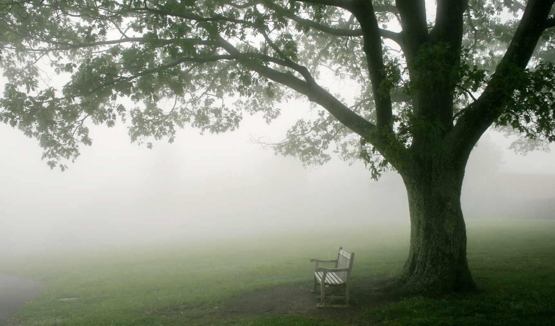 телефон, free, туман, утро, downloads, pictures,