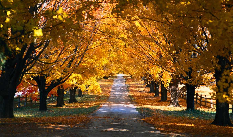 природа, деревья, осень, парк, года, времена,