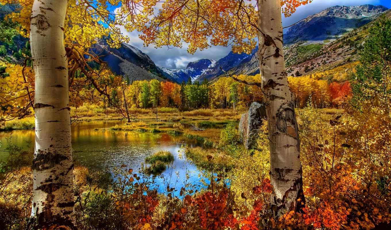 осень, вк, landscape, лес, деревья, листья, photography,