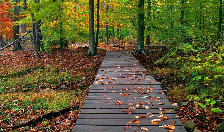 природа, осень, лес, мост,
