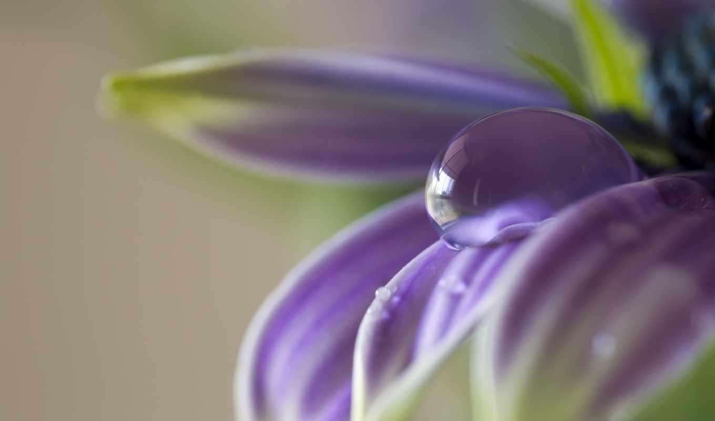 качества, картинка, макро, лепестки, цветы, есть, лучшего, но, такая, также, высокого,