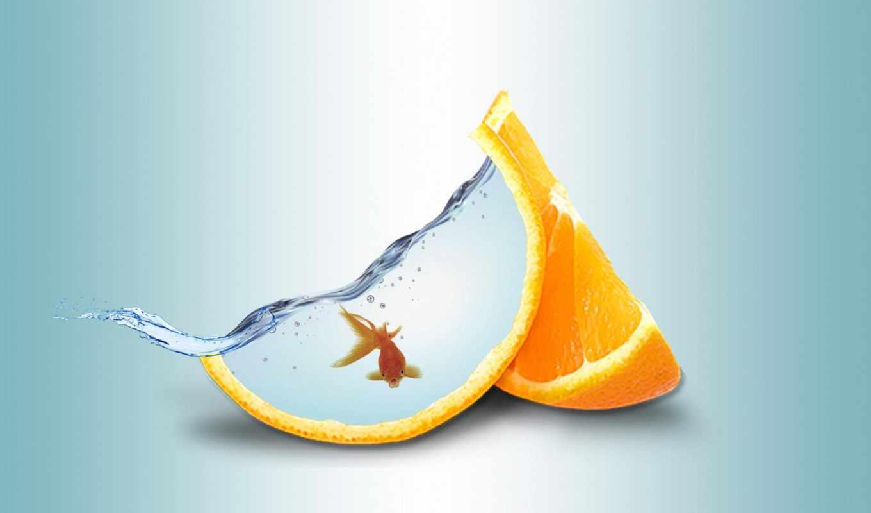 fish, золотая, water, оранжевый,