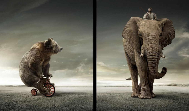 центр, медведь, слон, песнь, сервис, zoon, адрес, mantra, grizzly, highway, funny