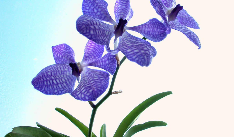 цветы, обои, красивые, цветов, вам, галереи, фото,