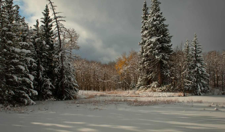снег, зима, деревья, тучи, ёль, хвойные,