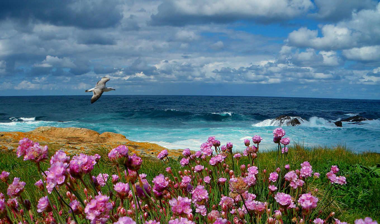 море, чайка, цветы, landscape, облака, небо, трава,