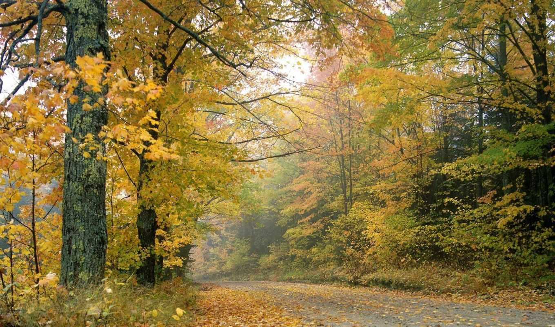 осень, красивые, дата, листья,