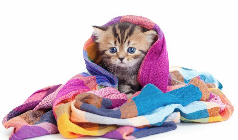 кошка, vafelnyi, торт, фотография, смотрет, vash, животное, доставка, котик, cena, украина